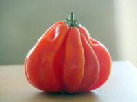 La tomate Coeur de Boeuf