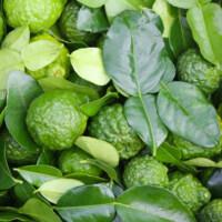 Feuilles et fruits du Combava